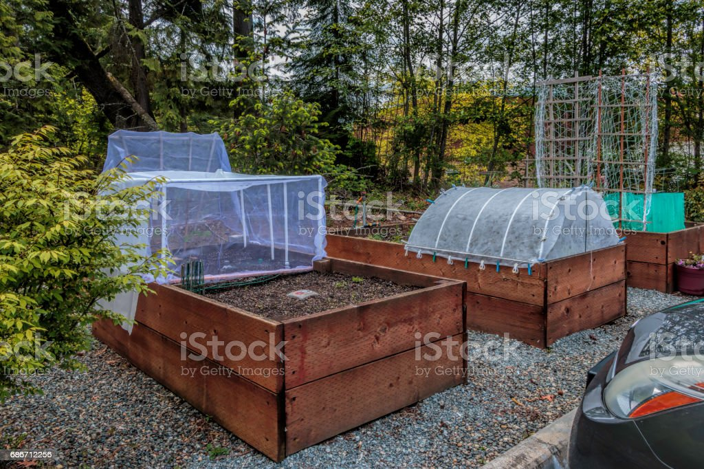Urban Gardening Raised Beds and Plant Protectors stock photo