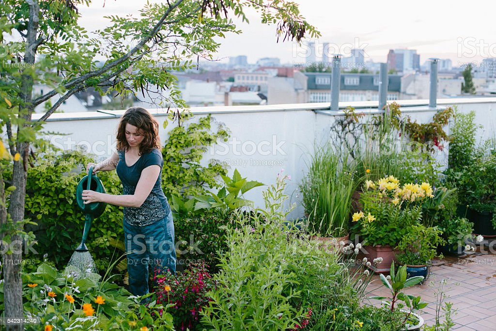 urban gardening: woman pours plants on roof garden stock photo