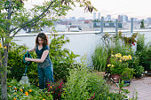 urban gardening: woman pours plants on roof garden