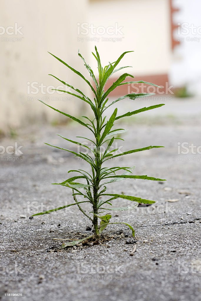 Urban greenery stock photo