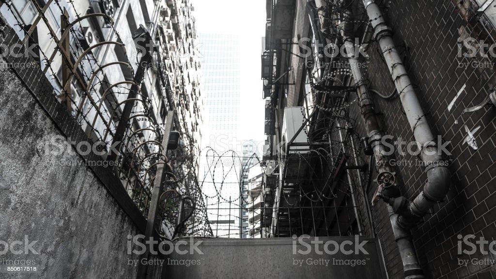 Urban Jungle stock photo