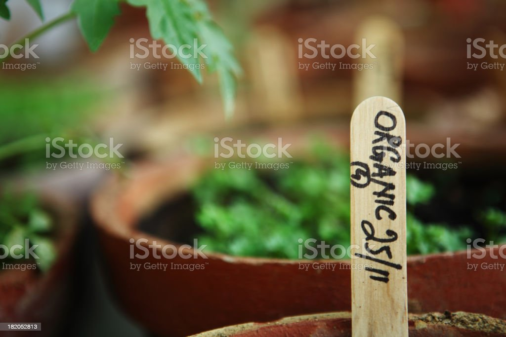 Urban Organic Vegetable and Herbs Garden in Balcony royalty-free stock photo