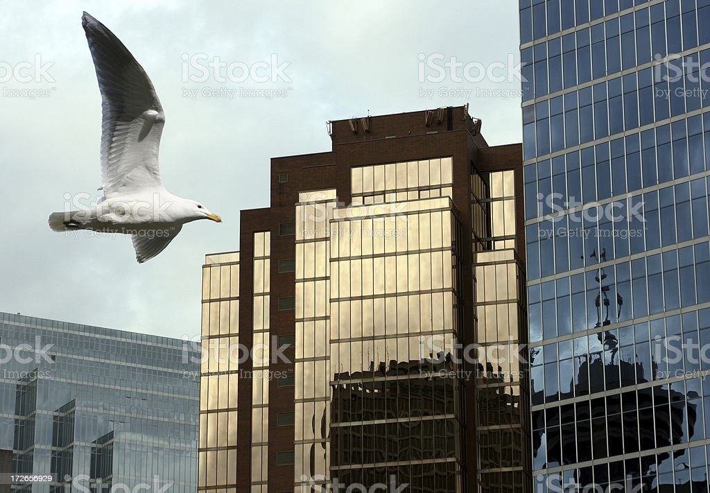 Urban Seagull stock photo
