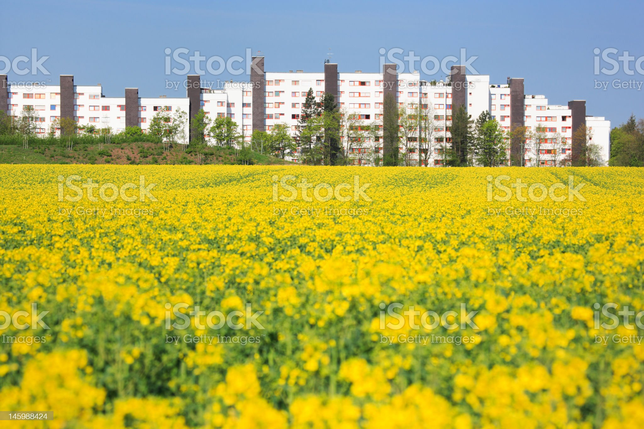 urban spring royalty-free stock photo