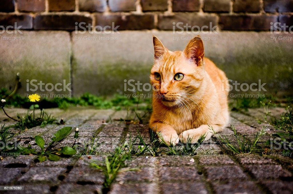 Urban Tiger stock photo