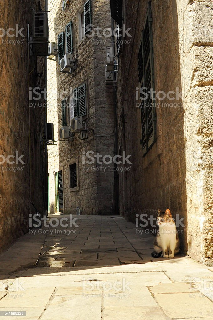 urban vagrant cat stock photo