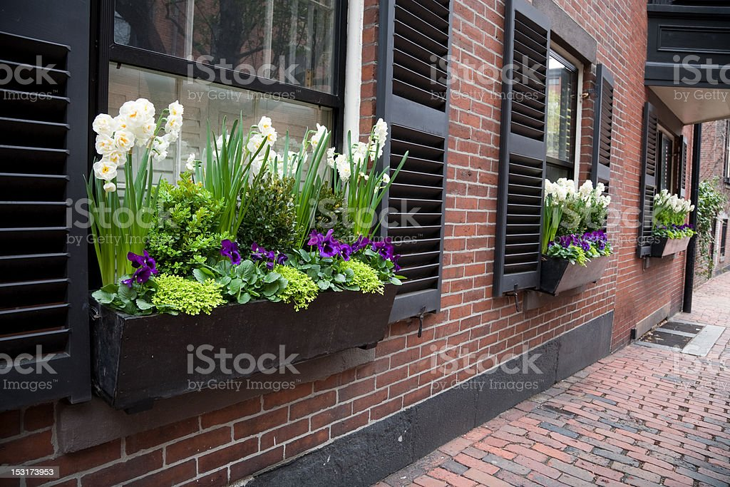 Urban Window Box royalty-free stock photo