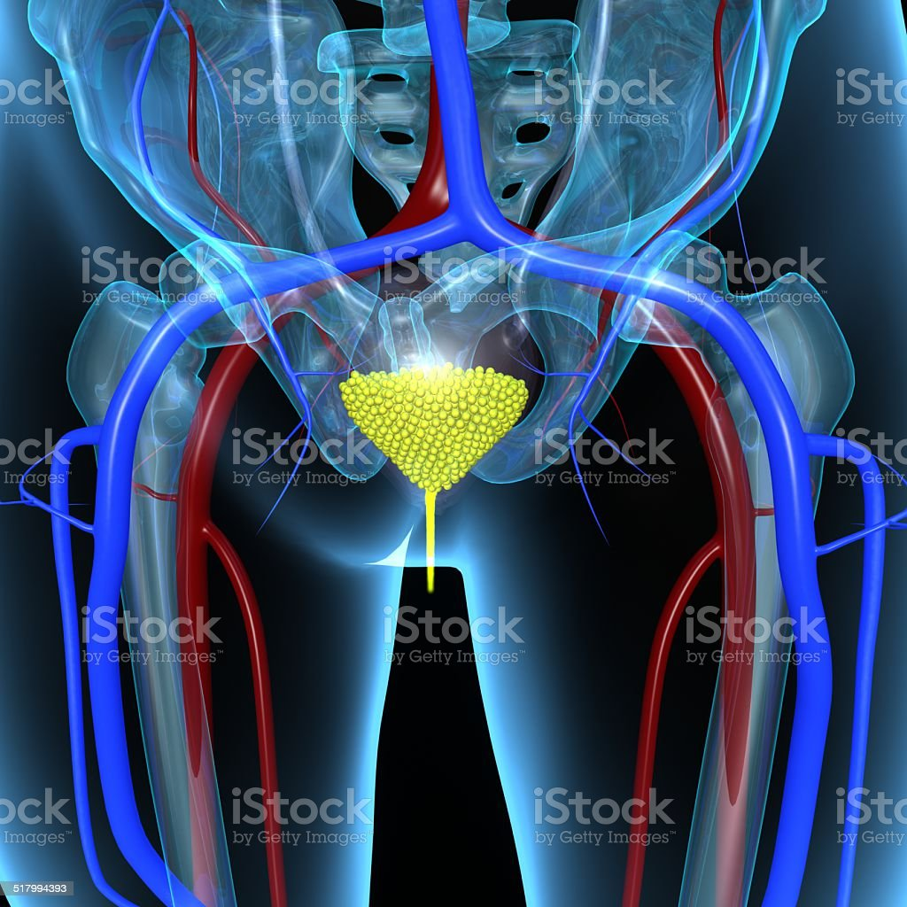 Urinary Bladder stock photo