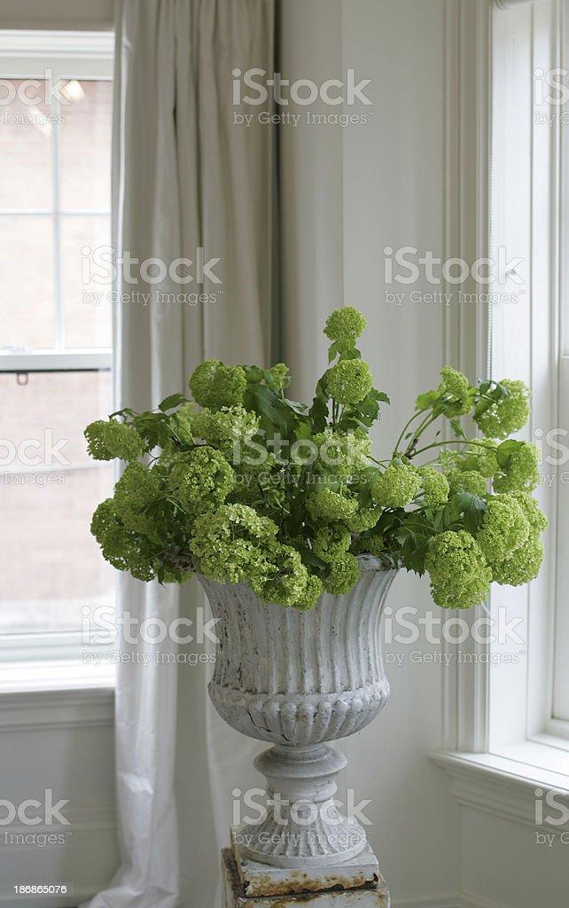 Urn with Hydrangeas stock photo