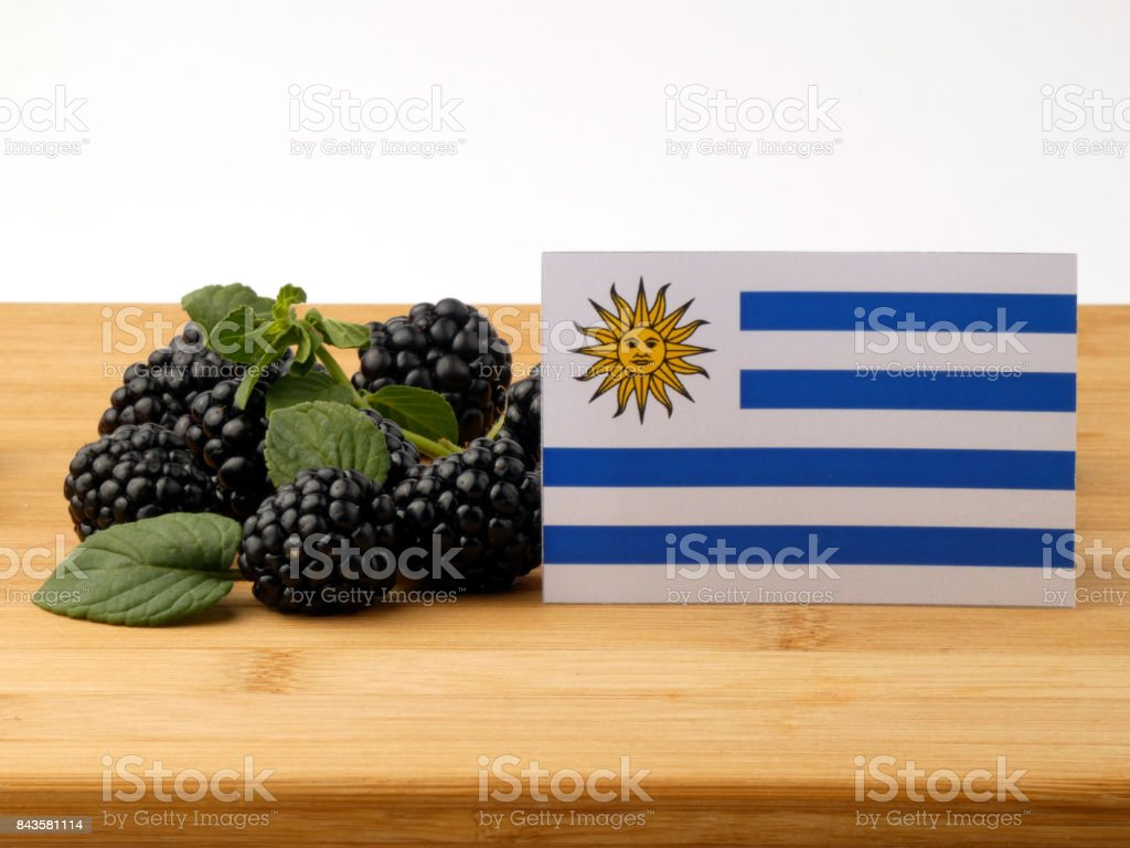 Uruguay flag on a wooden panel with blackberries isolated on a white background stock photo