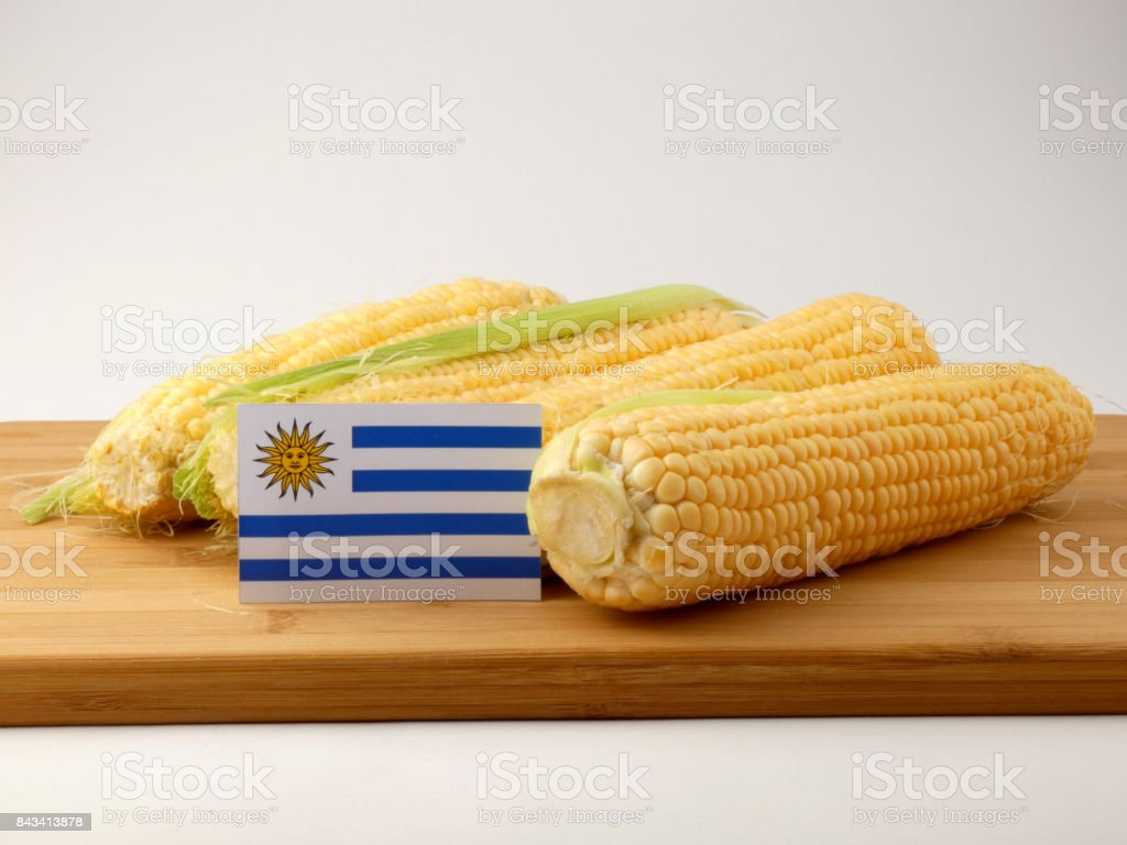 Uruguay flag on a wooden panel with corn isolated on a white background stock photo