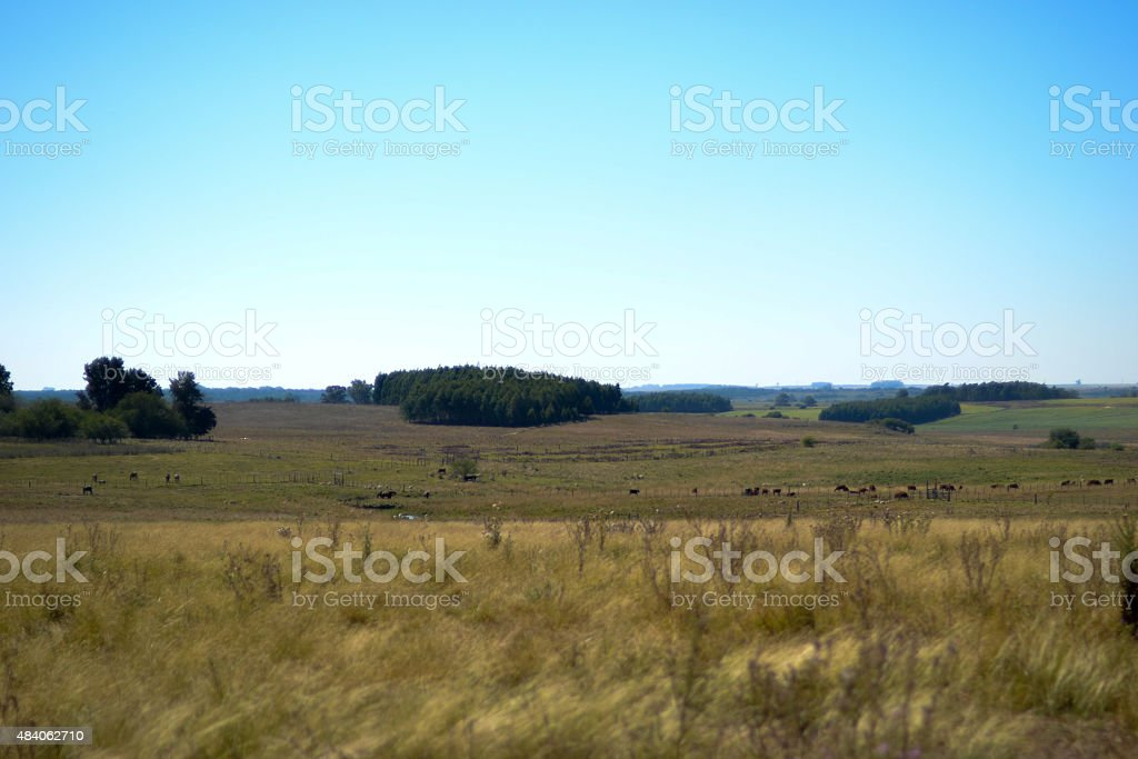 Uruguay rural field stock photo