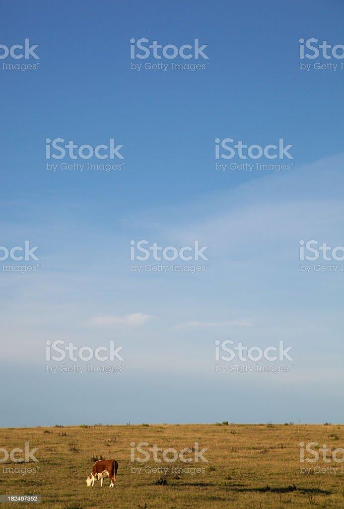 Uruguay vertical landscape stock photo