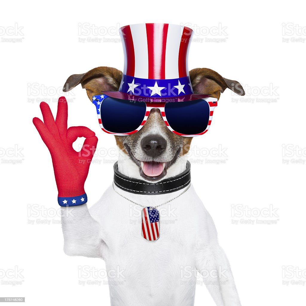 usa american dog royalty-free stock photo