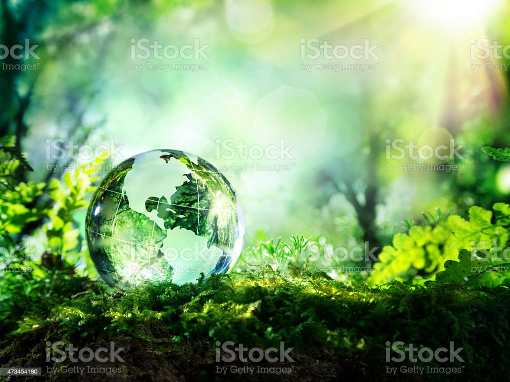 Usa globe resting in a forest - environment concept stock photo