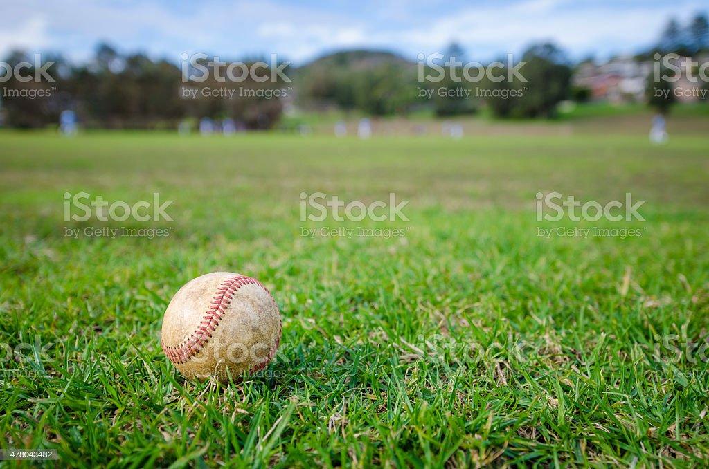 Used baseball laying on fresh green grass stock photo