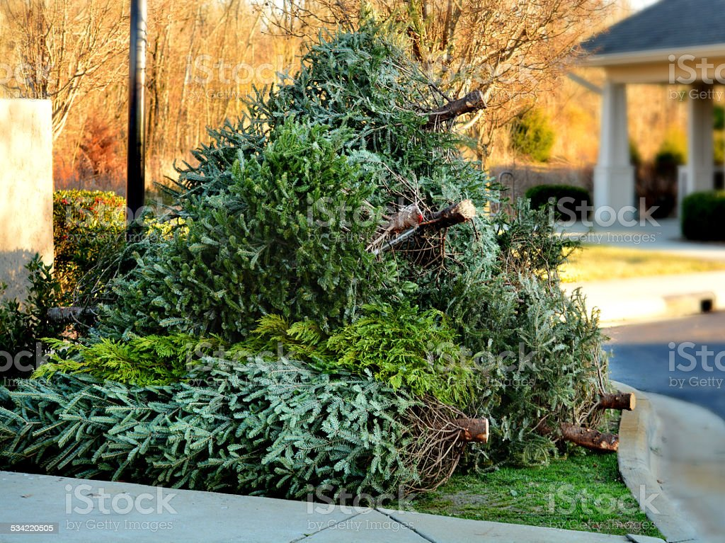 Used Christmas tree in front yard by curb. stock photo