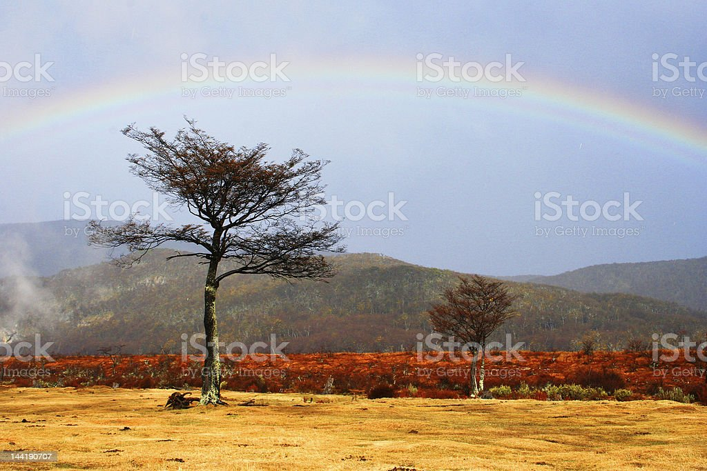 Ushuaia, Yellow Landscape royalty-free stock photo
