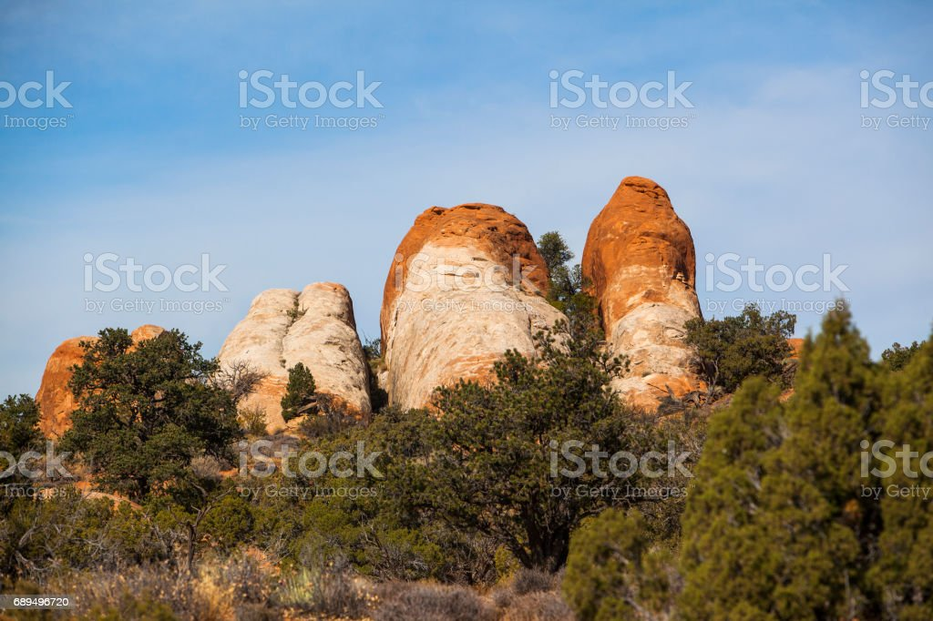 Utah juniper (Juniperus Osteosperma) in front of the red sandstone rocks formation near by the Sand Dune Arch, Arches national park, Utah stock photo