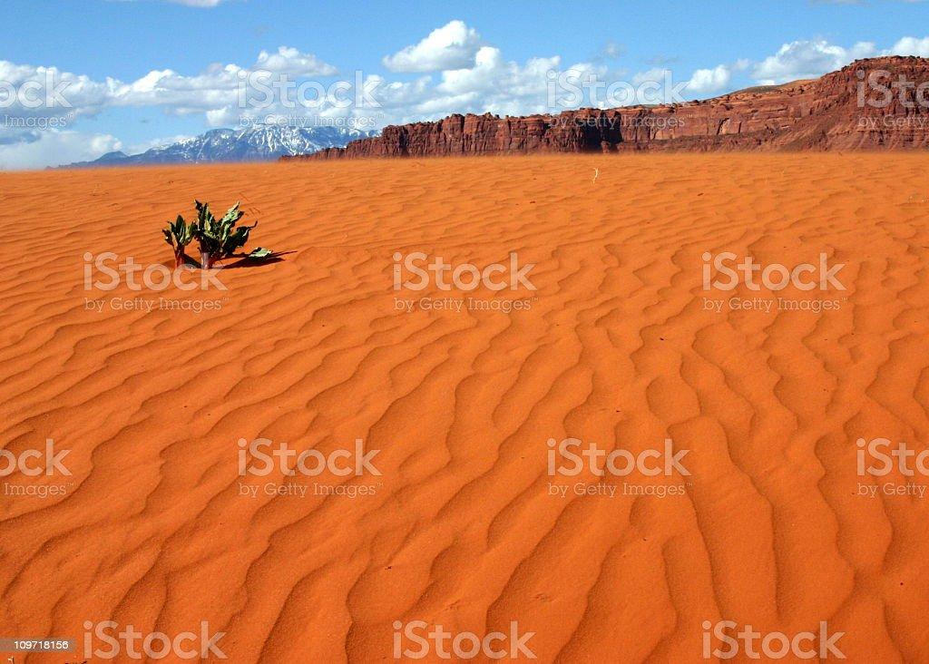 Utah Sand Dunes royalty-free stock photo