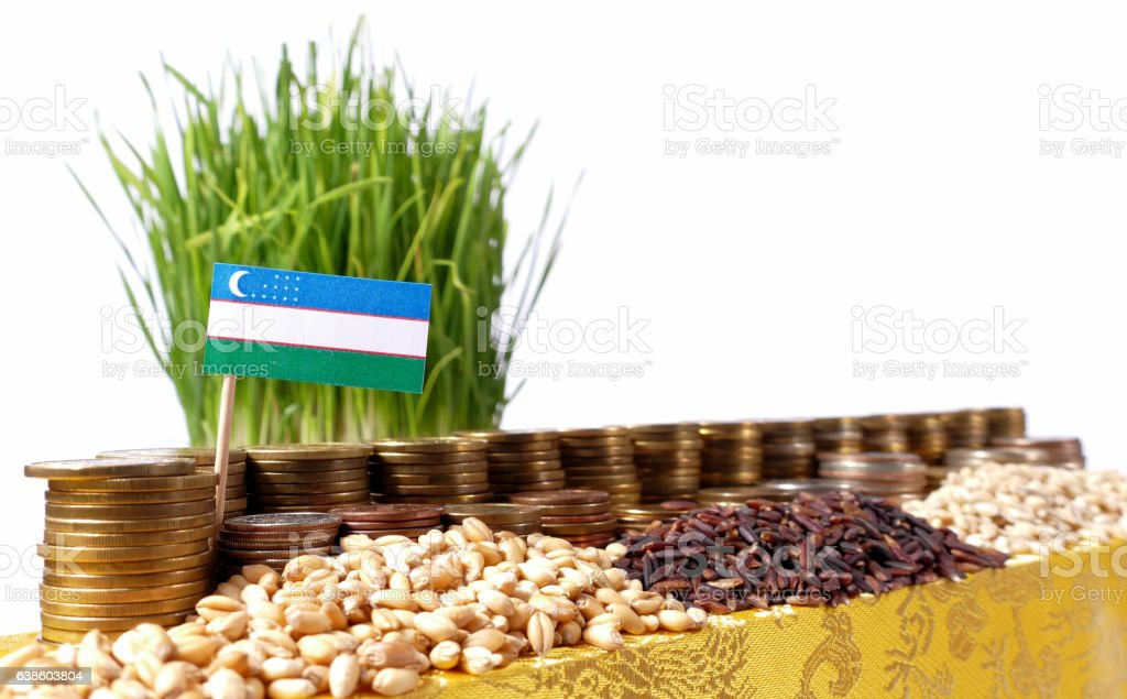 Uzbekistan flag with stack of coins and piles of wheat stock photo