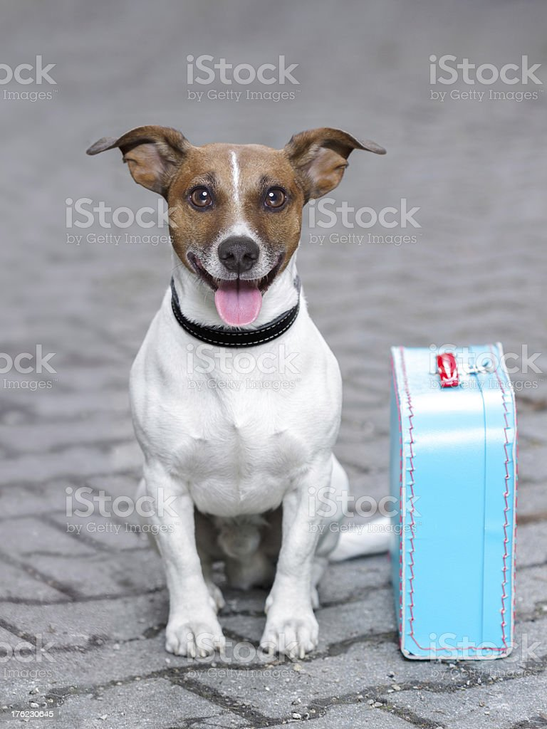 vacation dog stock photo