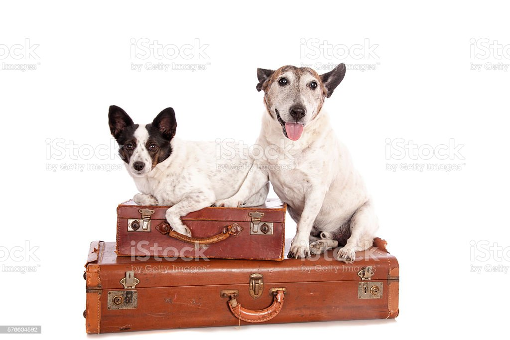 Vacation Dogs stock photo