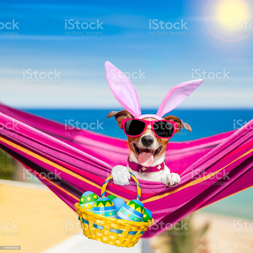 Vacation easter dog stock photo