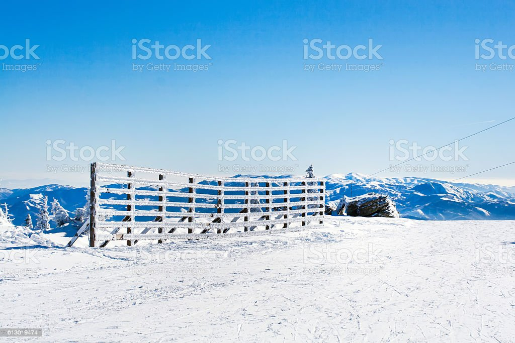 Vacation rural winter background with white pines, fence, snow field stock photo