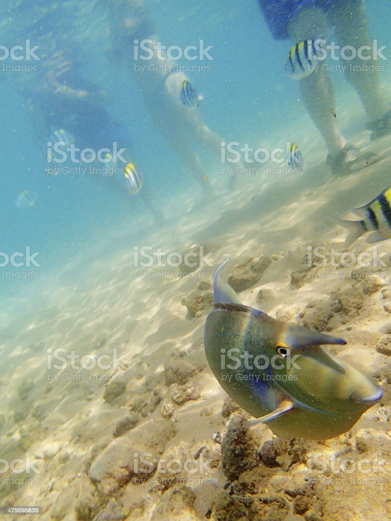 Vacationers and tourists in the beach with tropical fishes royalty-free stock photo