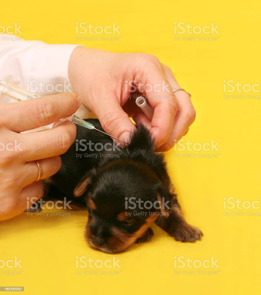 vaccination royalty-free stock photo