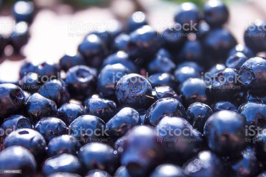 Vaccinium myrtillus stock photo