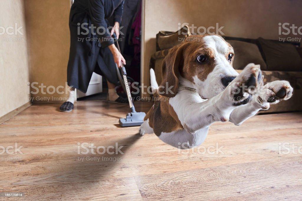 vacuum cleaner stock photo