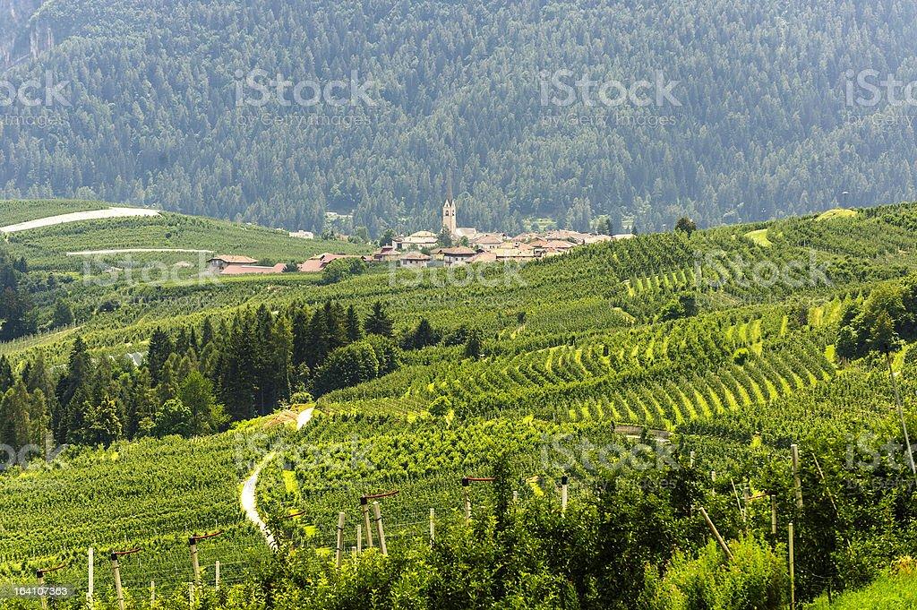 Val di Non (Trento) stock photo