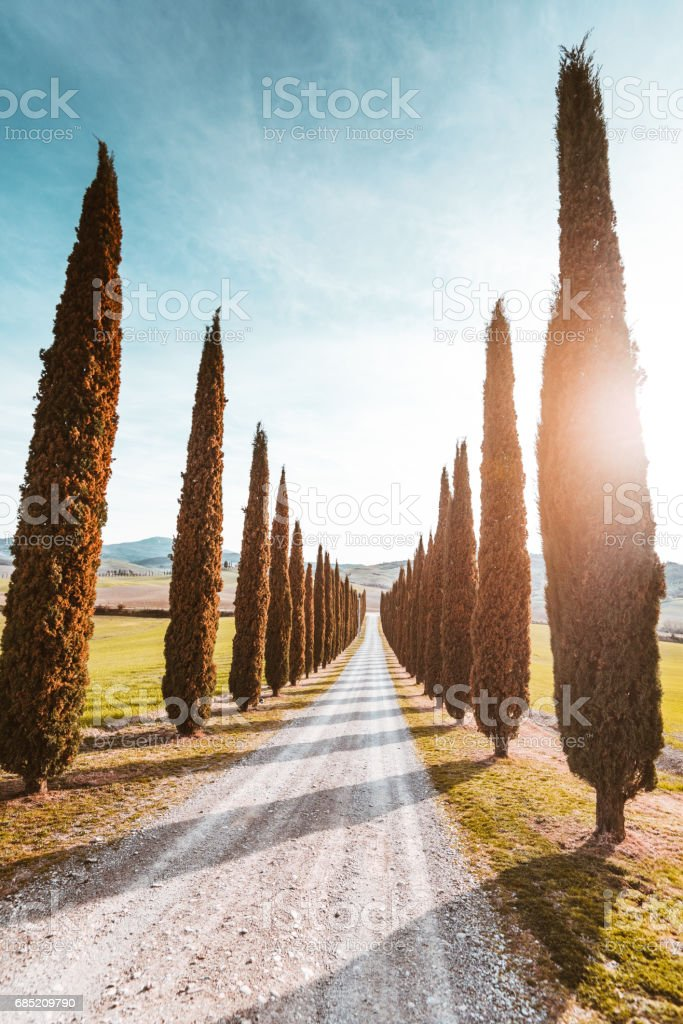 Val d'orcia country road with cypress stock photo
