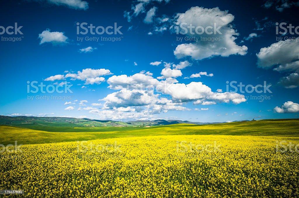 Val d'Orcia landscape, Tuscany royalty-free stock photo