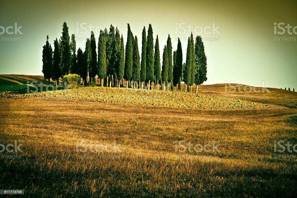 Val d'Orcia, Tuscany stock photo
