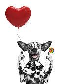 Valentine dog holding heart baloon