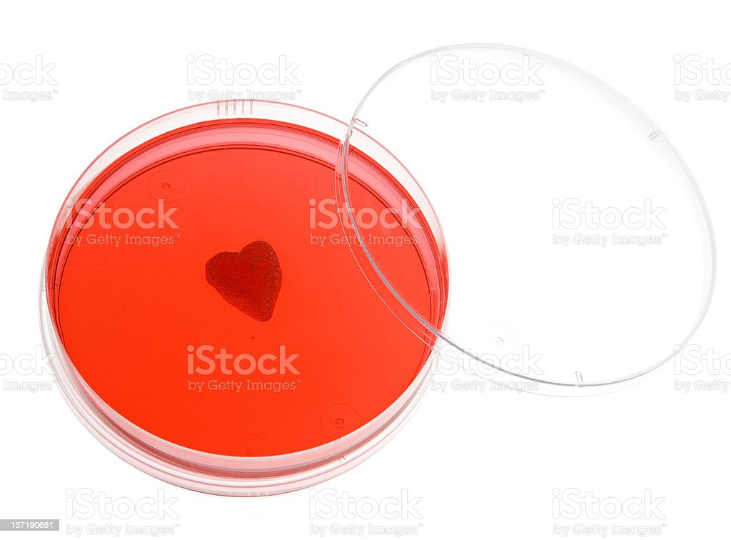 Valentine in the lab stock photo
