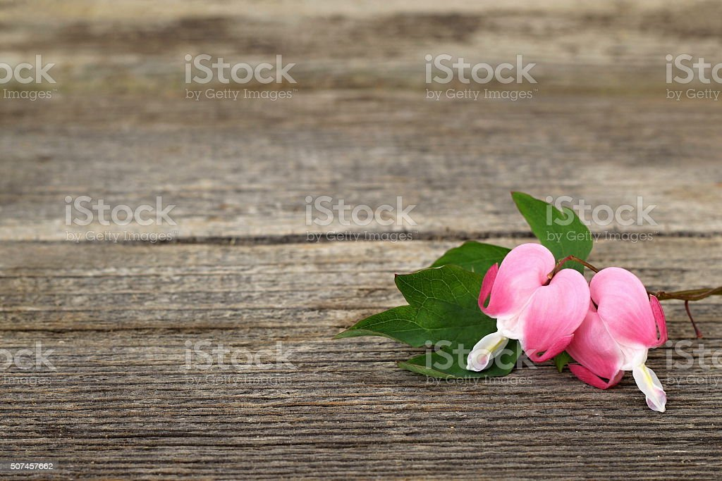 Valentine´s day background with floral hearts on a wooden plank. stock photo