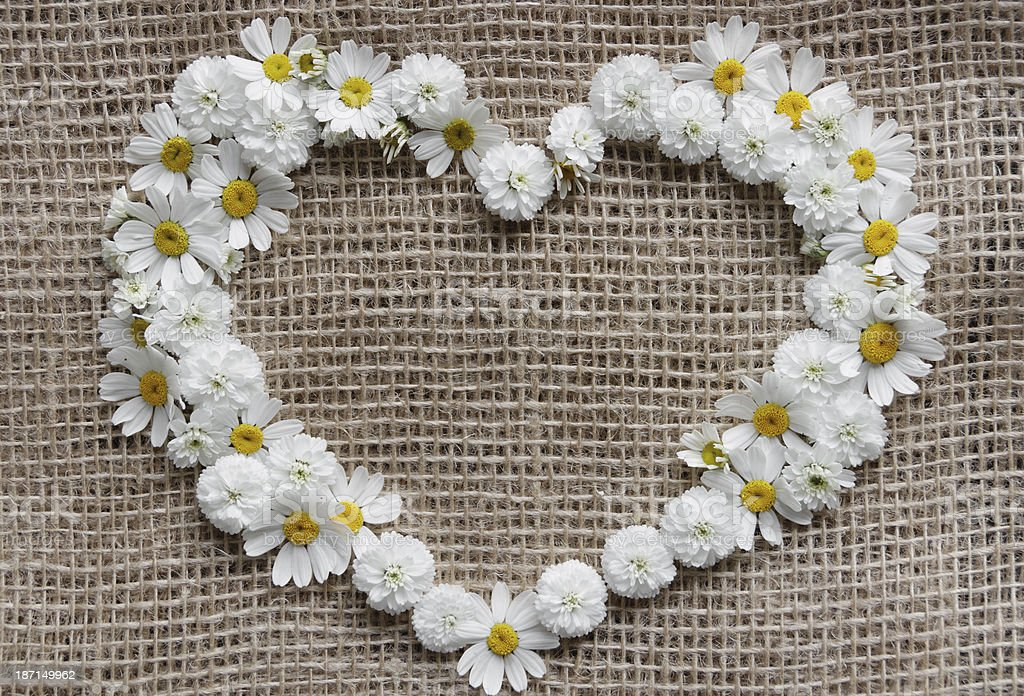 Valentines day card. Heart of daisies stock photo