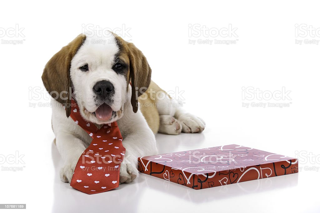 Valentines Day Puppy stock photo