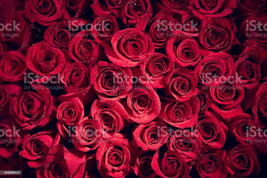 Valentine's day red roses background stock photo