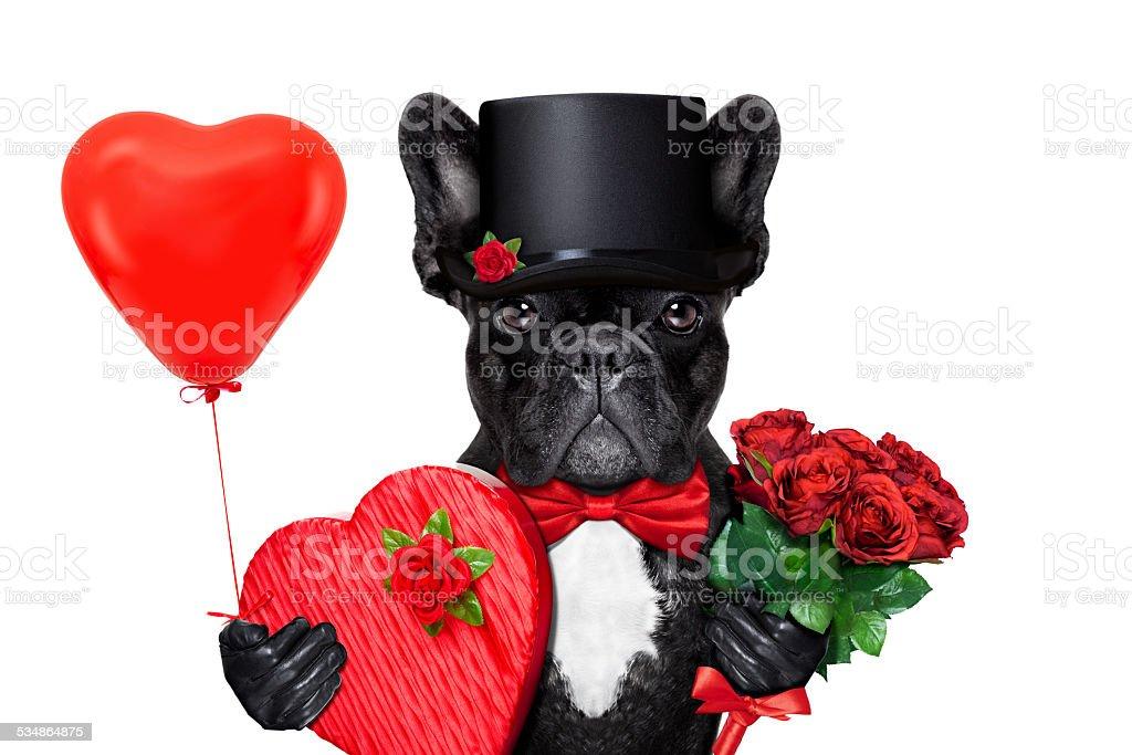valentines groom dog stock photo