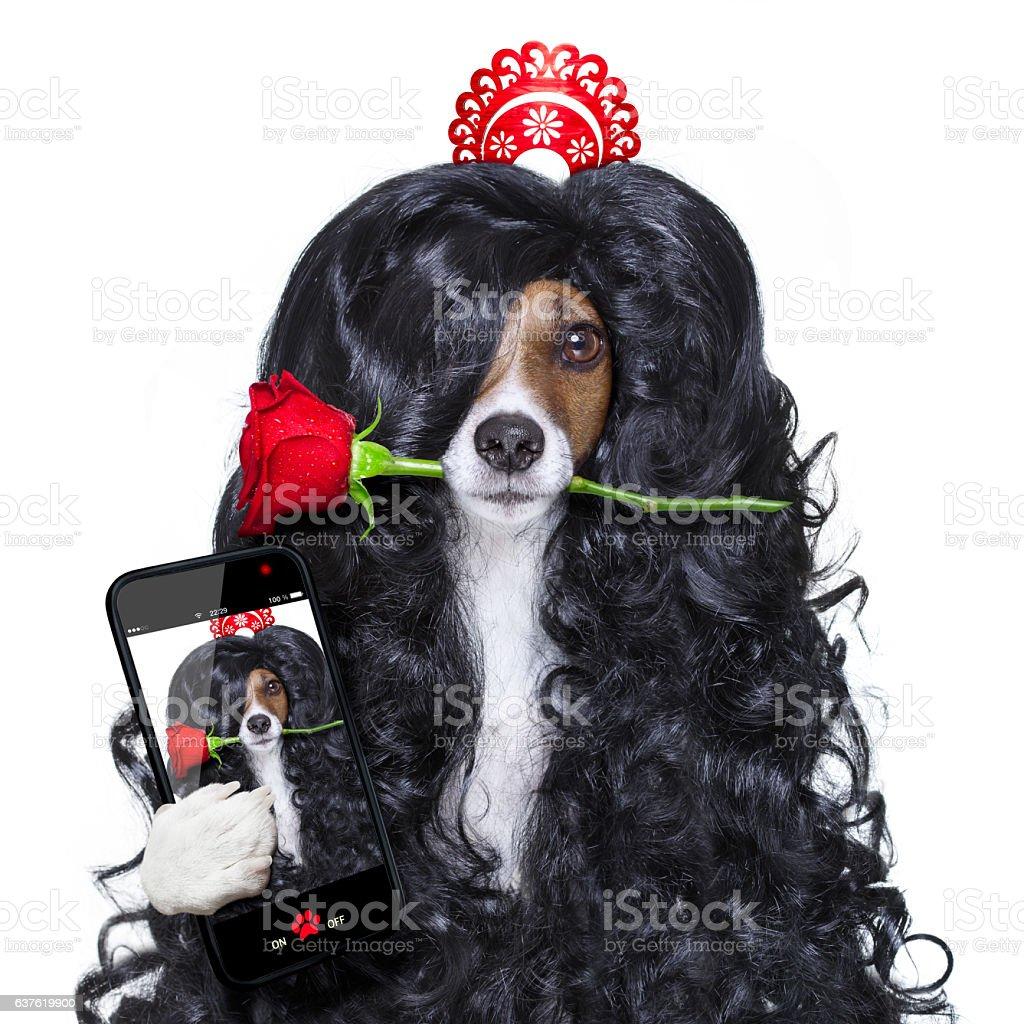 valentines in love spanish lola dog stock photo