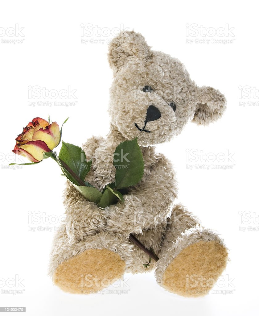 Valentines Teddy Bear with a Rose royalty-free stock photo