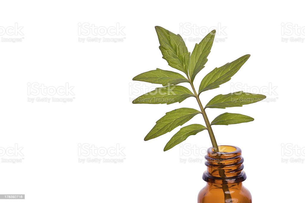 valerian homeopathic herb stock photo