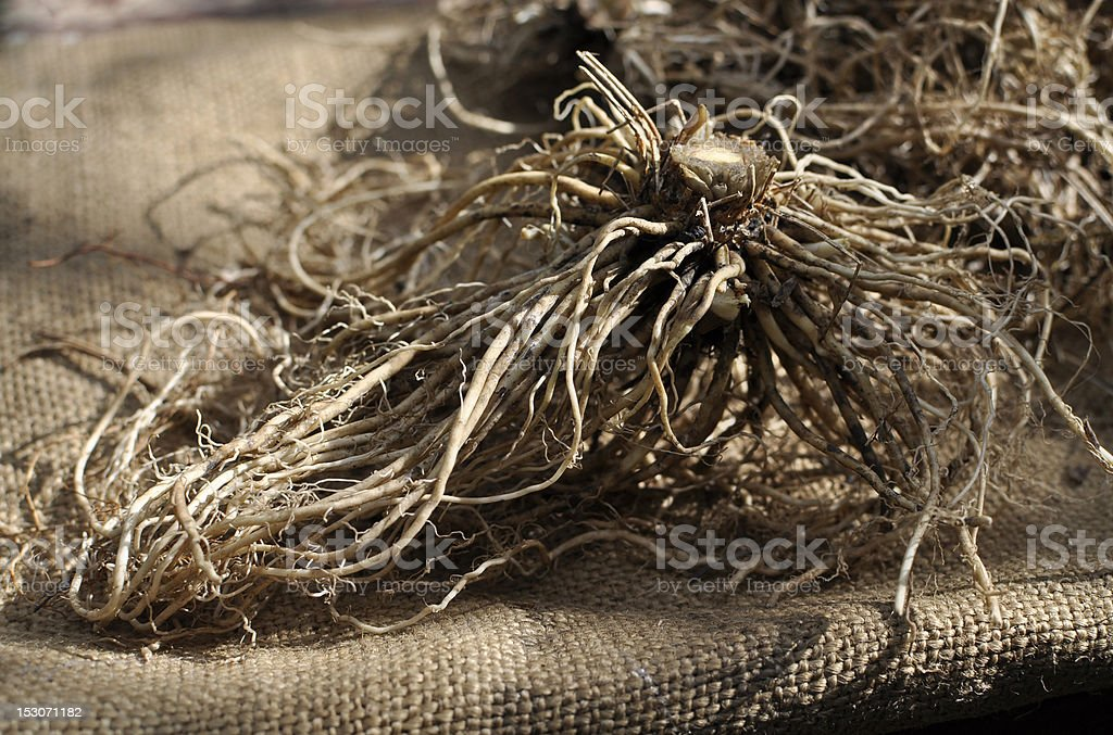 valerian roots stock photo