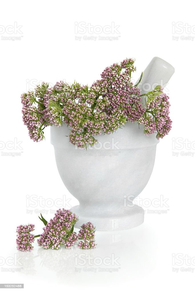 A Valerian style pot filled with herb flowers  stock photo