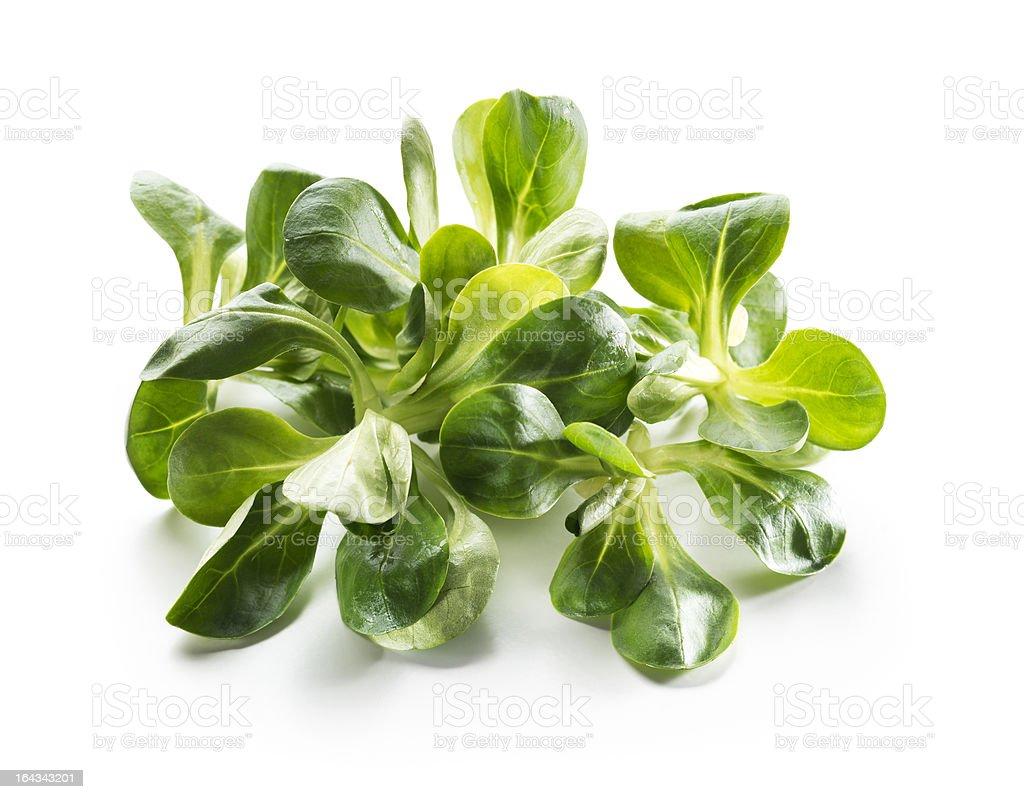 Valerianella salad royalty-free stock photo
